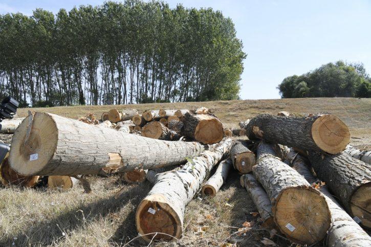 Čovek poginuo je dok je izvlačio drva u podnožju Cera